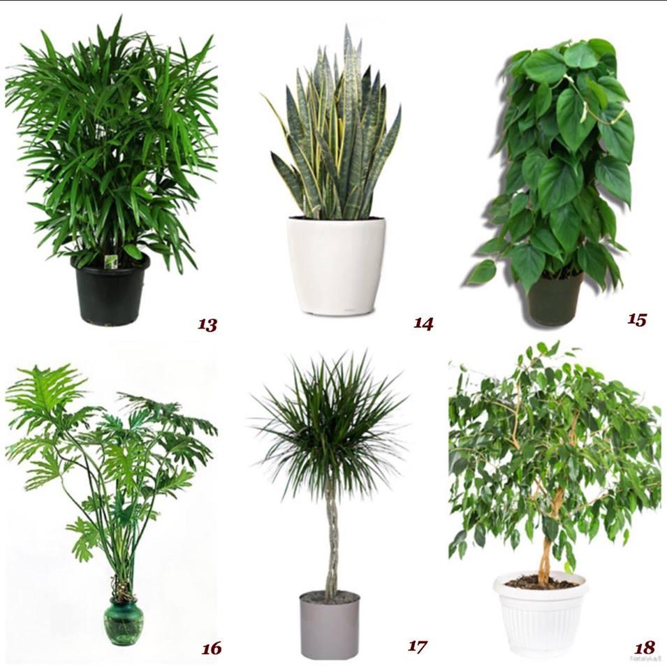 Ambienti detox con l 39 aiuto delle piante purificanti - Pianta da ufficio ...
