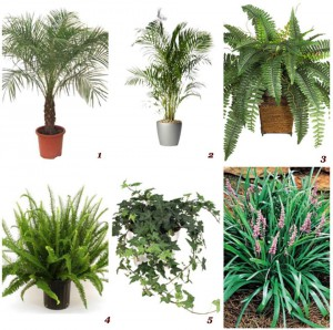piante purificanti nasa