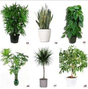 piante detox nasa
