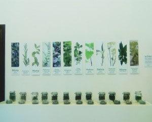 Le aromatiche di Pioppi, allestimento ad opera del team della Prof. Enrica De Falco del dipartimento di farmacia dell'università degli studi di salerno