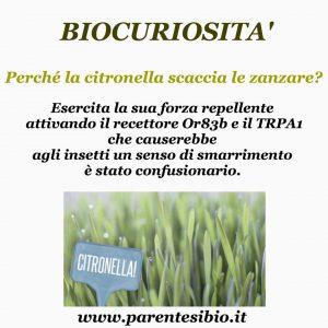 biocuriosità citronella