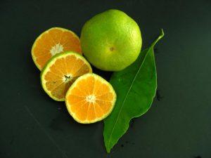 Sono una buona fonte di Vitamina C, Acido Folico e Beta-Carotene. Contiene anche, seppur in piccole quantità, Potassio, Magnesio e Vitamina B1,B2 e B3. Inoltre a seconda della specie contiene Luteina, Zeaxantina, alpha-pinene, myrcene, gamma-terpinene, citronellal, linalool, neral, neryl acetate, geranyl acetate, geraniol, thymol, e carvone. Contiene nobiletina, un flavone contenuta nella buccia che potrebbe essere utile contro il diabete e l'obesità ma sono necessarie ulteriori ricerche.
